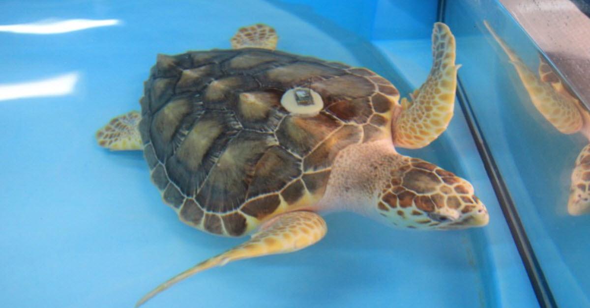 Sea Turtle Day at Gumbo Limbo